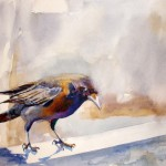 Kay Smith_Plenty to Crow About-watercolor